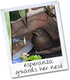 Esperanza guards her nest